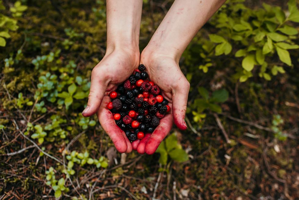 wild-berry-picking-pemberton-british-columbia