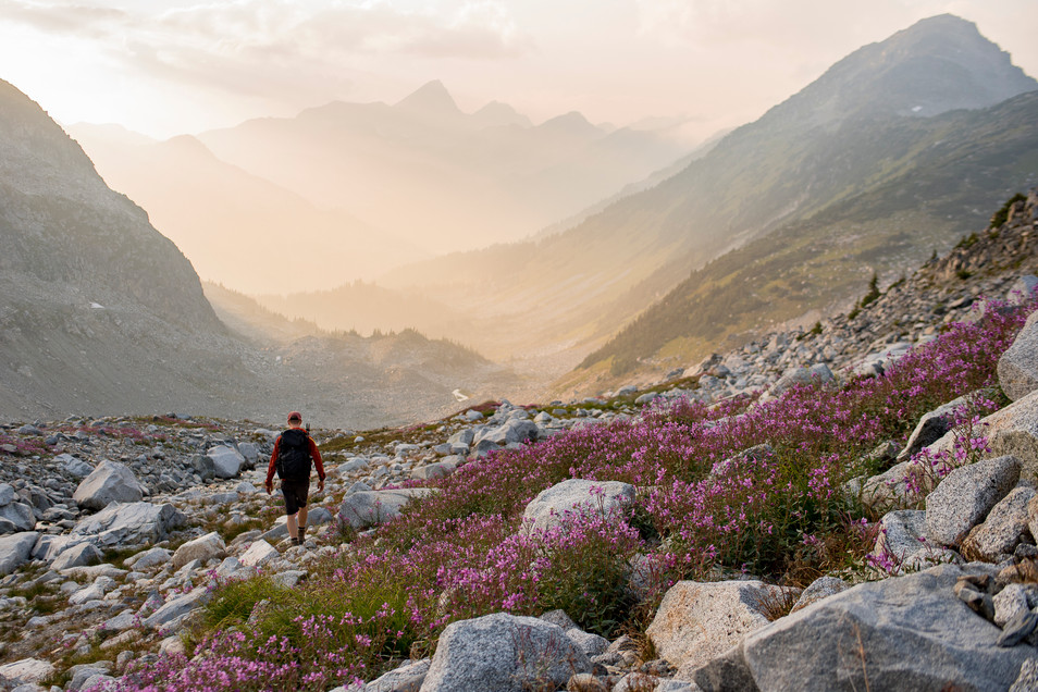 man-walks-through-alpine-wild-flowers-sunset-pemberton-british-columbia