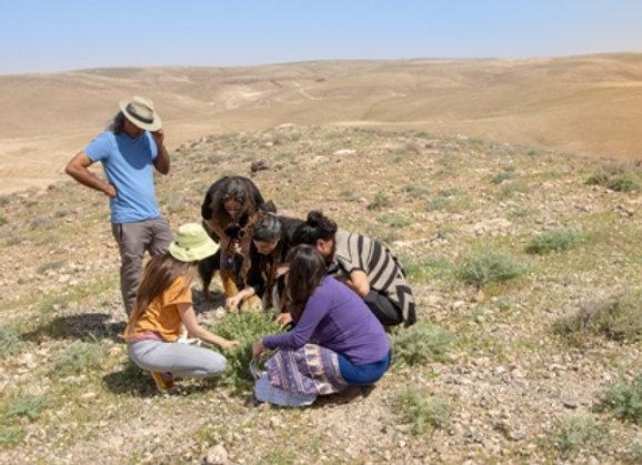 מייד אחרי הקורונה - שובר קבוצתי לסיור ליקוט של צמחי מדבר למרפא ומא