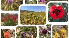 פוסט יומולדת אביבי או מה הארנב של אנרג'ייזר יכול ללמוד מאלה שצומחים במדבר?