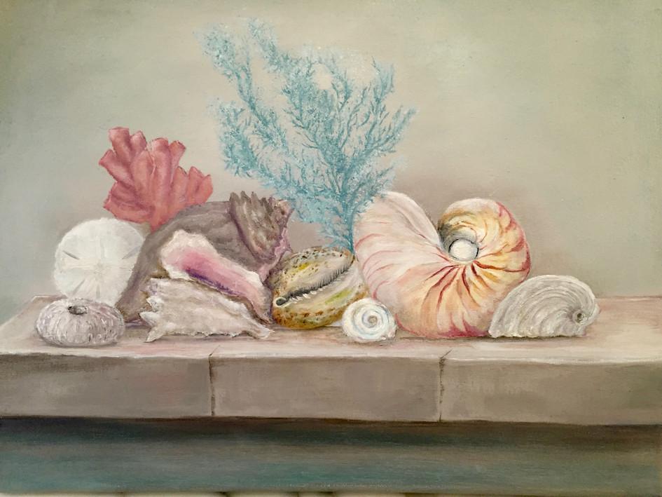Everyone Likes Sea Shells