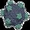 DNA_Virus.png