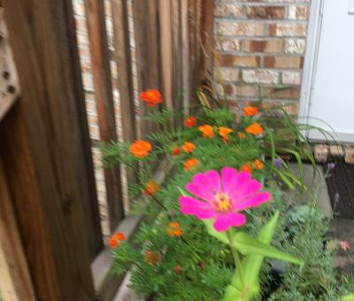 Container Garden: Summer 2020 Results