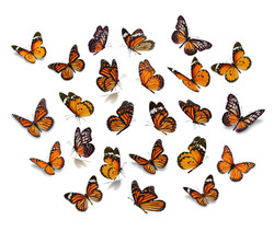 Big Set Monarch Butterfly.jpg