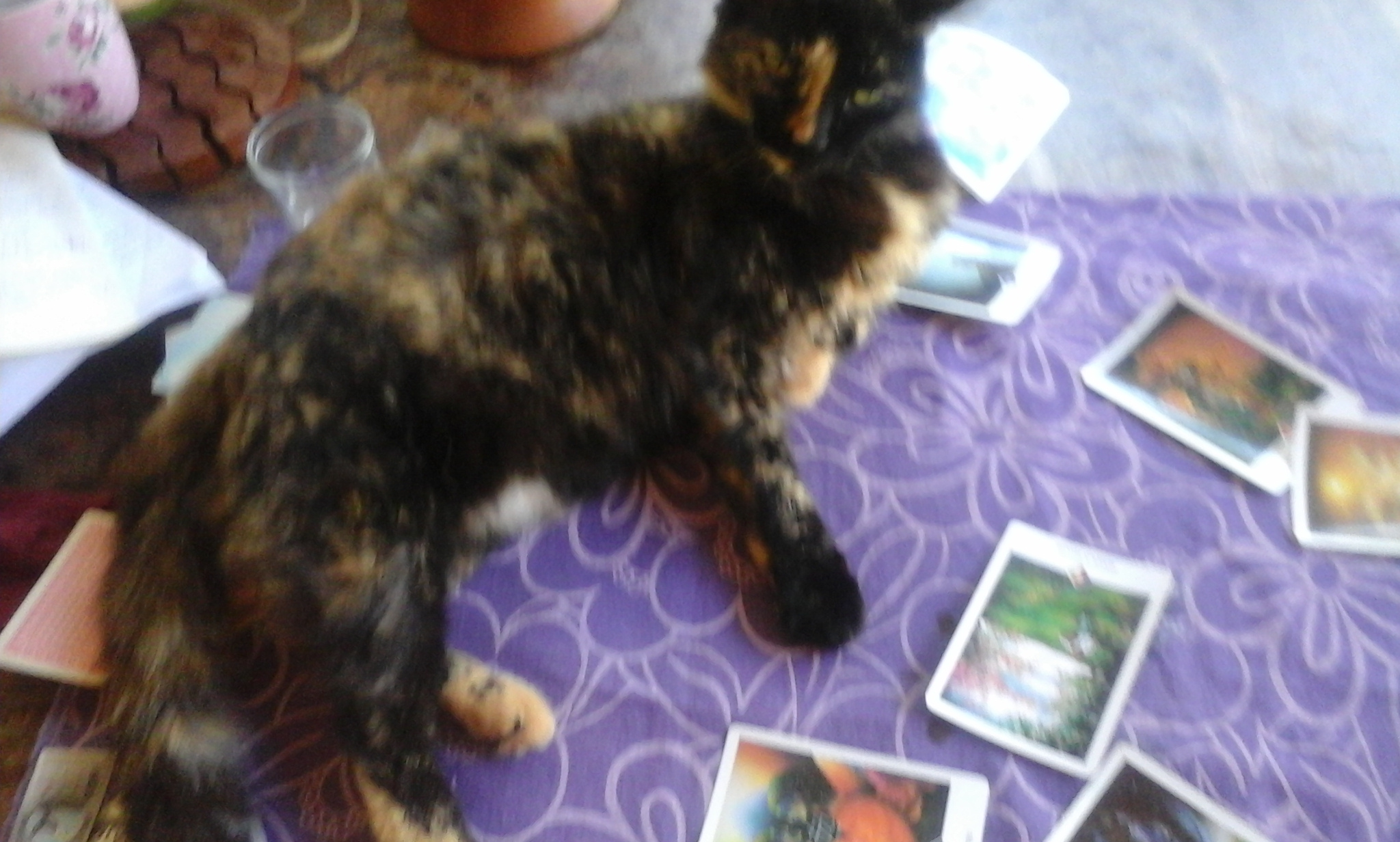 Tarot, gato e magia