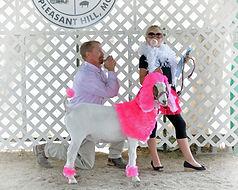 Goat costume contest poodle