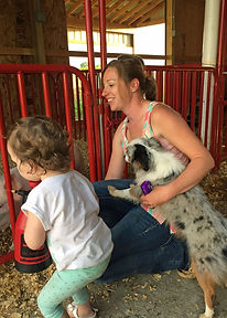 Blue merle mother daughter show pig barn