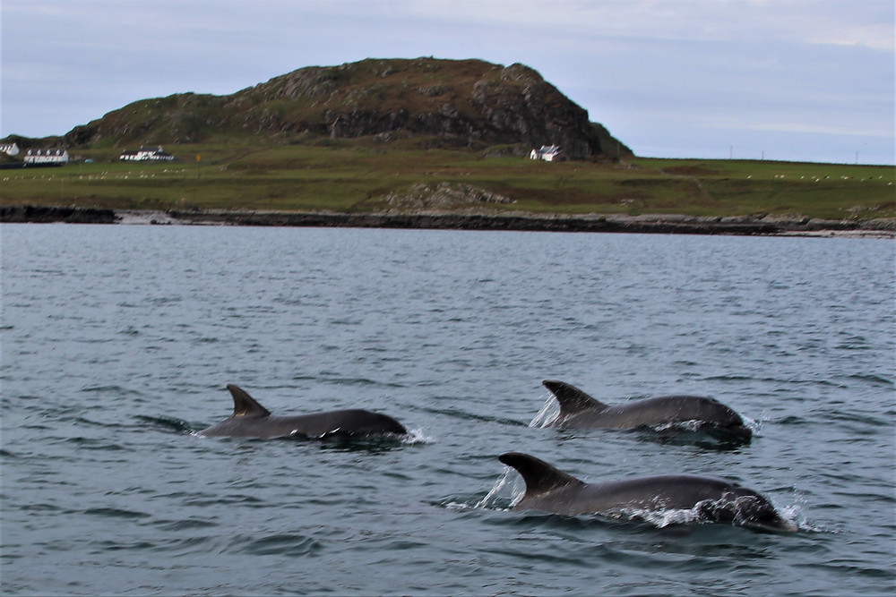 Dolphins - the marine equivalent of the Red Arrows