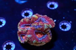 Cuttlefish 2020812032220.JPG