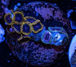 Cuttlefish 2020780032220.JPG