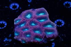 Cuttlefish 2020802032220.JPG