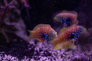 Cuttlefish 2020587020720.JPG