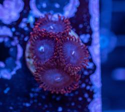 Cuttlefish 2020783032220.JPG