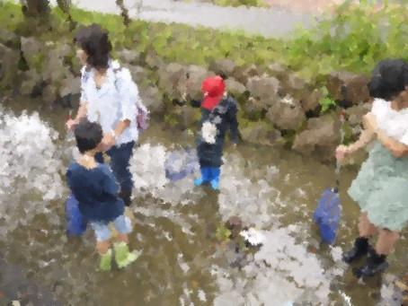 七瀬川の生き物調査イベントを実施!