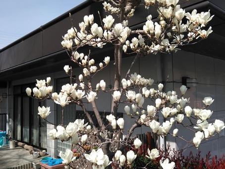 サロンのお庭に春の訪れ!