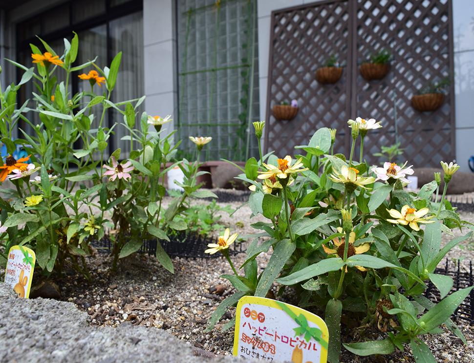 (ガーデンに咲く花の様子)
