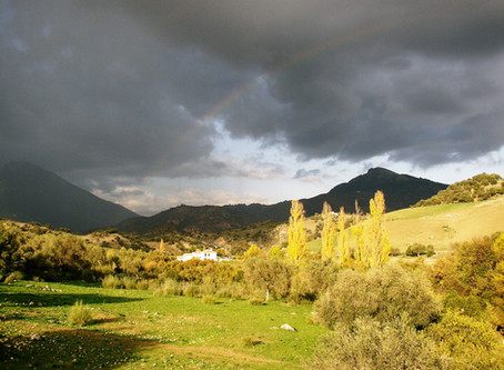 Wishing everyone wellness in these dark days. Light will follow - it always does. My old house Spain