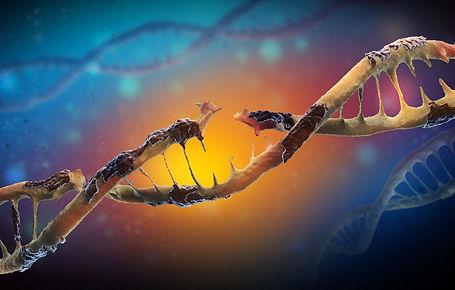 DNA Damage.jpg