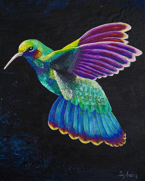 Hummingbird - Print