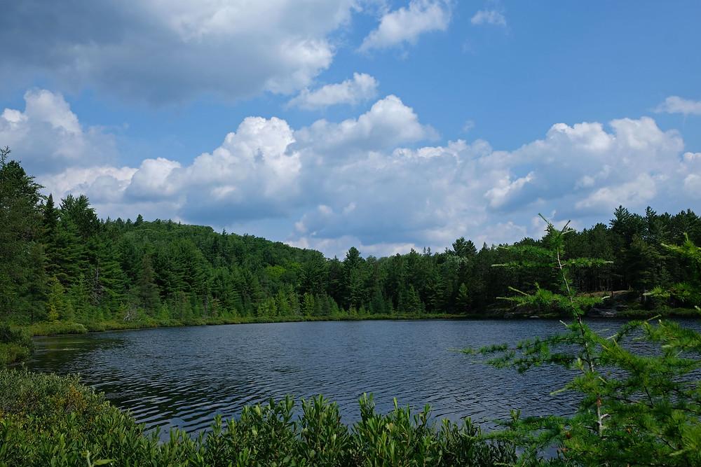coon-lake-algonquin-ontario-canada