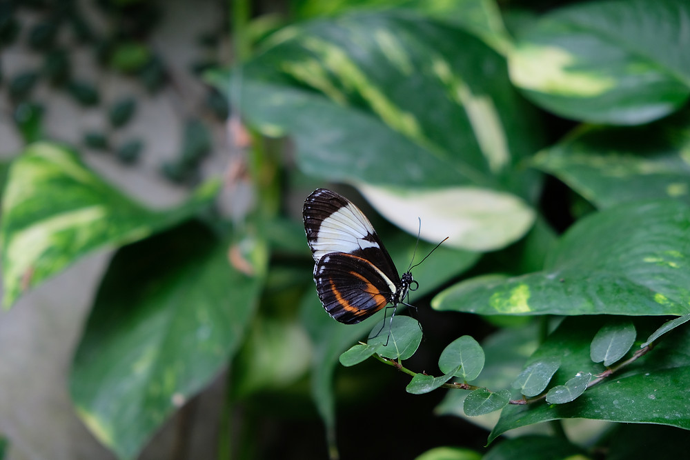 Cambridge-Butterfly-Conservatory-date