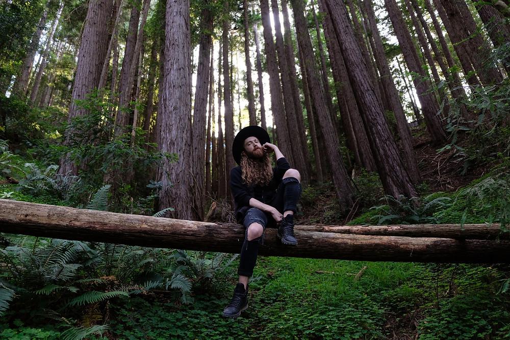 Mount-Tamalpais-california-red-wood-forest