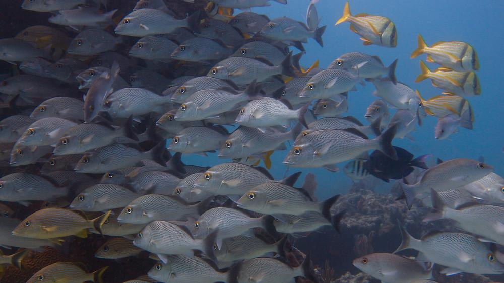 mexico-scuba-diving