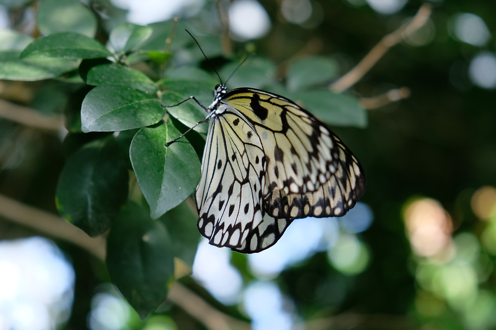 Cambridge-Butterfly-Conservatory-day-trip