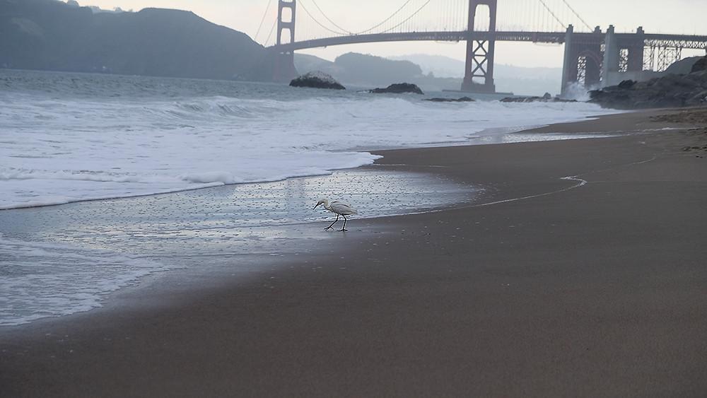 beaches-San-Francisco