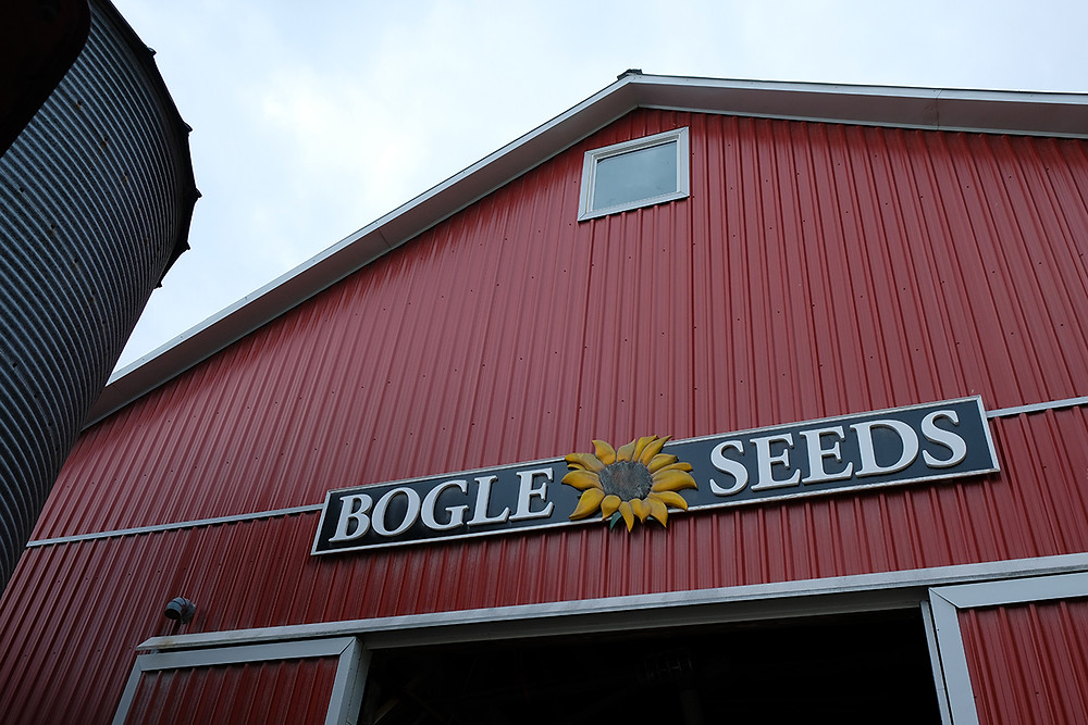 sunflower-farm-Bogle-Seeds