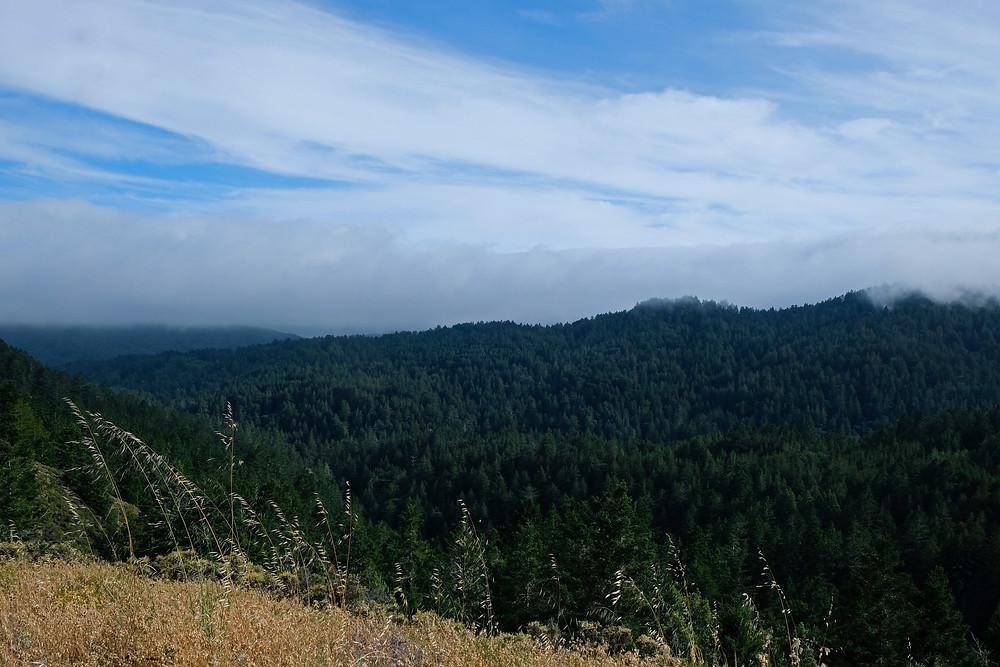 Mount-Tamalpais-california