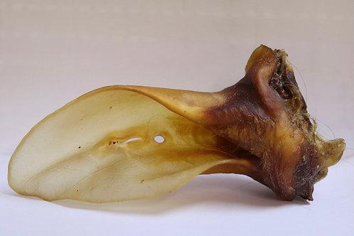 Rinderohr mit Muschel 1 Stück
