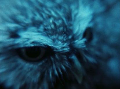THE OWL'S LEGACY 06_Image courtesy Icaru
