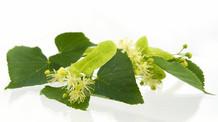 怎樣辨認高品質的茶樹油