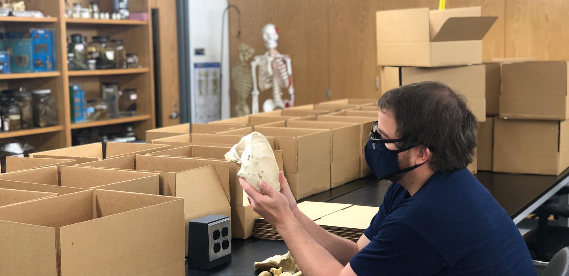 Graduate student, Josh Taylor, examining a cranium