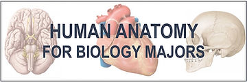 Human-Anatomy-Banner.jpg