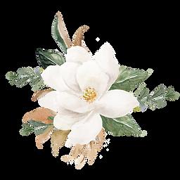 magnolia flower website_edited.png