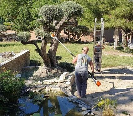 taille ornementale oliviers | Jardinage | A Votre Service