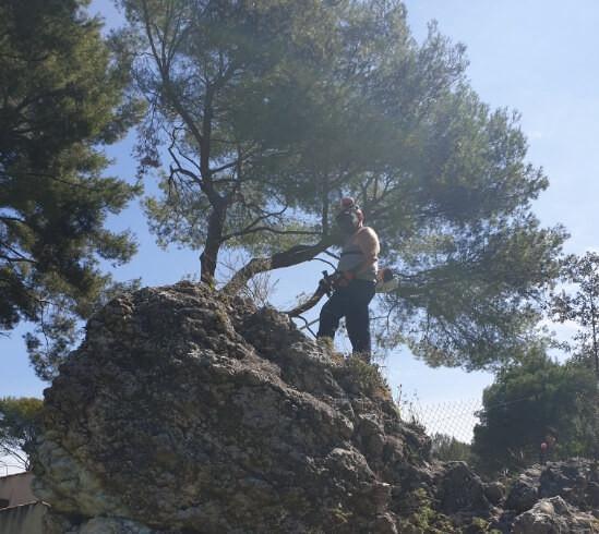 jardinage rocher