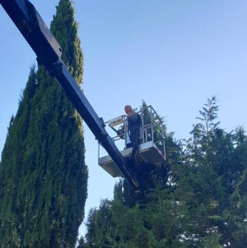 Jardinage | A Votre Service | Bouches-du-Rhône