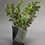 Thumbnail: Box Vase (#1)