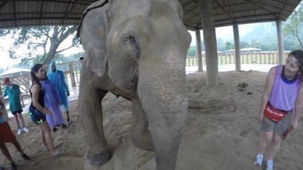 Chang Mai Elephant Sanctary, Thailand
