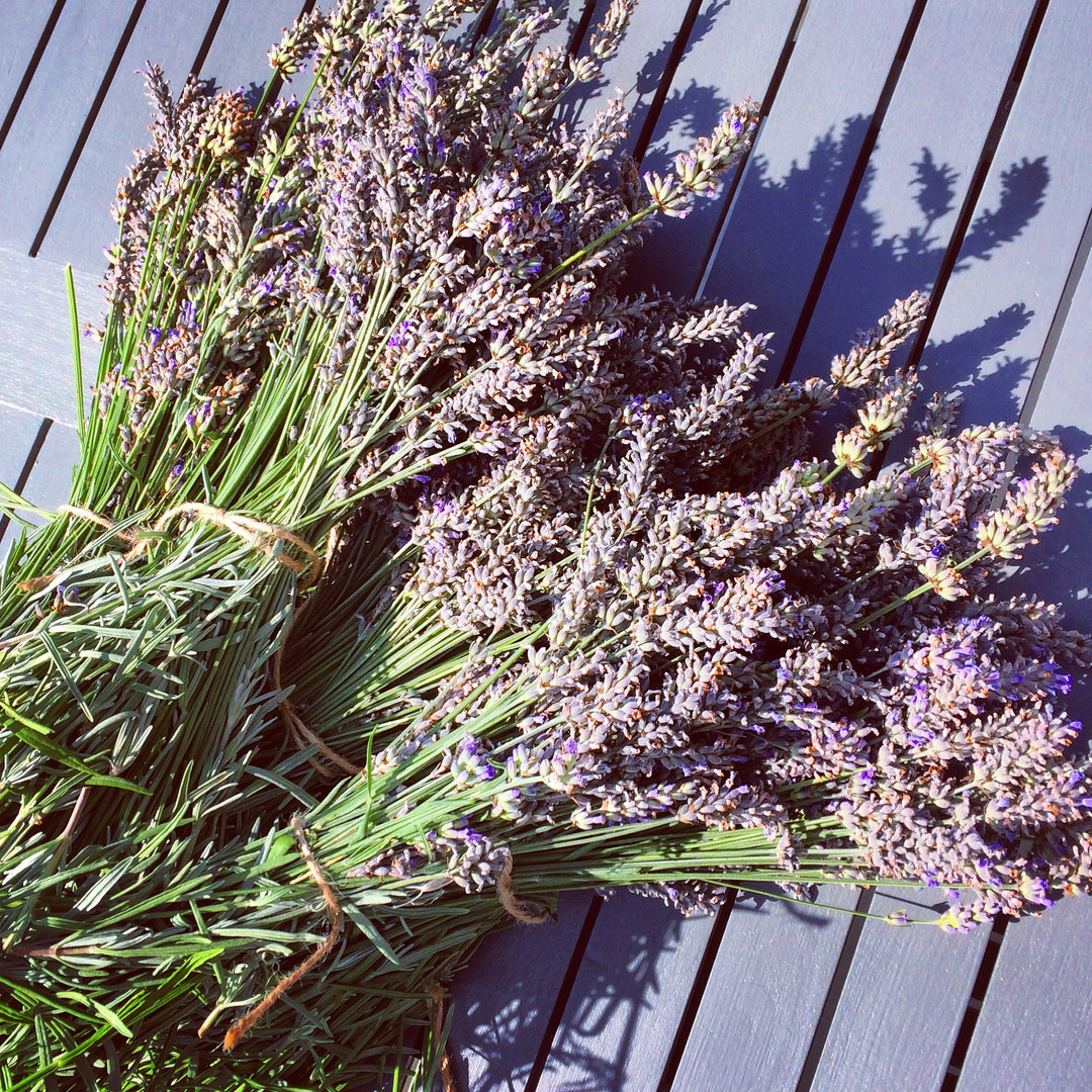 Freshly Cut Isle of Wight Lavender
