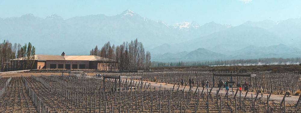 Mendoza é centro da região vinícola do país