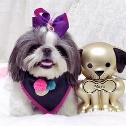 Pet Memory Keepsake with Dog