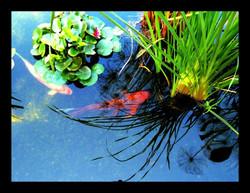 Pond beauties