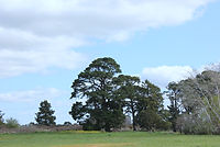 PHOTO - TREES.JPG
