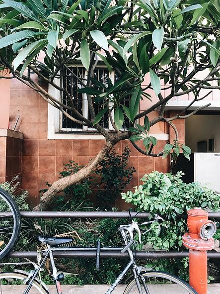 Street Tel Aviv bike.jpeg