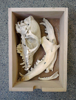 Bones in Boxes (6)
