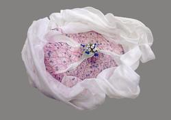 Muslin Dissection (2)